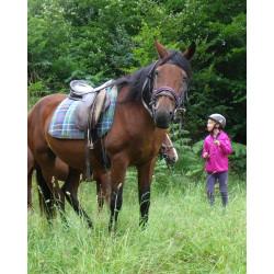 SUR LES TRACES DE L'OURS PYRENEES - Spécial cheval FR