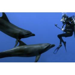 DAUPHINS DE RANGIROA INT plongée avec tuba (snorkeling)
