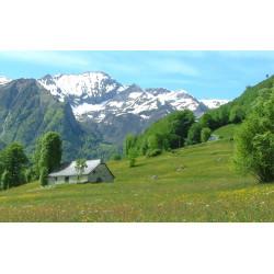 Arrivée Pyrénées