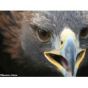 IBEX Kirghizistan - Ornithology International Biodiversity Expedition