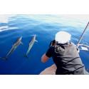 Dauphins des Archipels