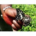 Papillons de Kpalime